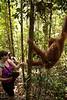 Aurora reaches to touch an orangutan who has swung close to our trail.