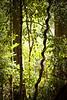 A vine spirals upward among the green jungle foliage.