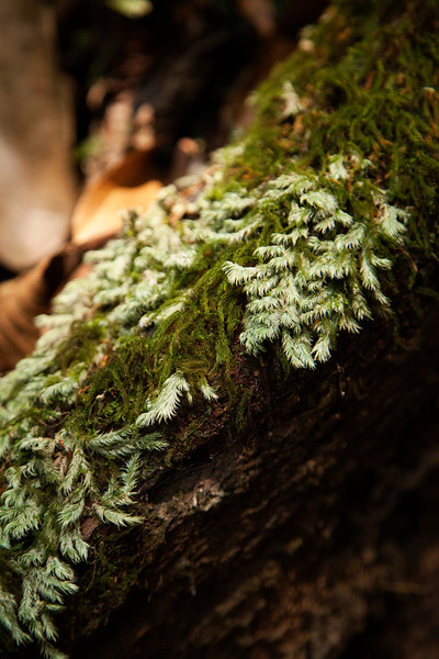 Moss carpets a fallen log on the jungle floor.