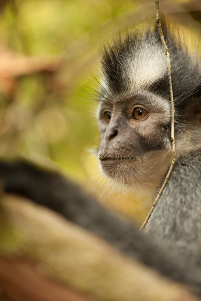 A very uninterested Macaque sits idly by the side of the trail, allowing tourists to come within touching distance for photos.