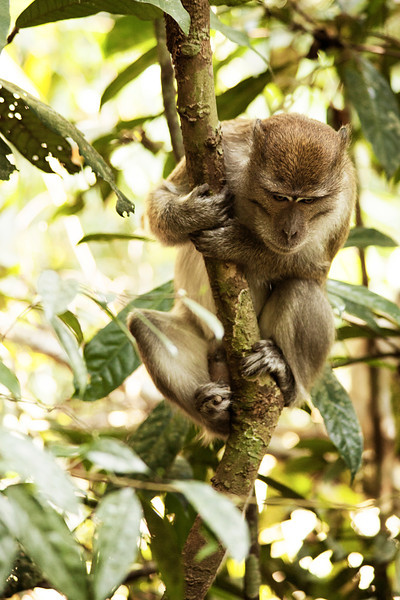 A small macaque watches from a perch in the trees, doubtless looking for an opportunity to steal food from our group.