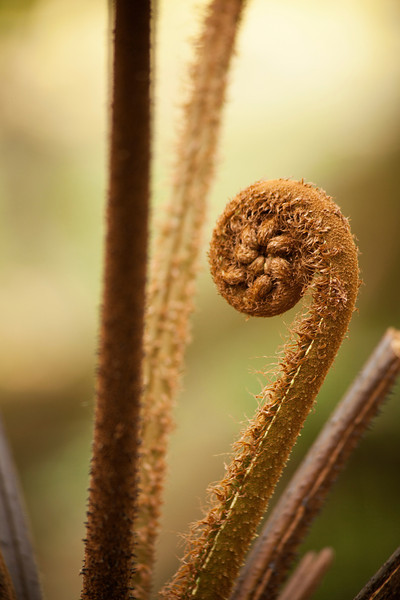 A large fern unfurls a new leaf near our jungle trail.