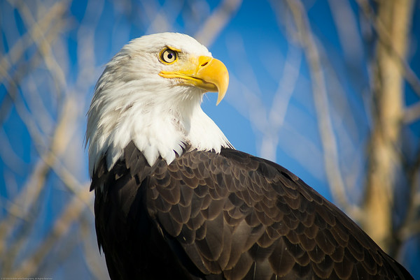 This eagle was the first bird I saw at Hawkquest.