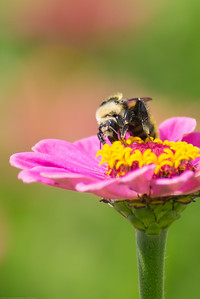 I need more practice with bee shots but love trying with a really long lens