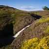 Goldfields by the stream
