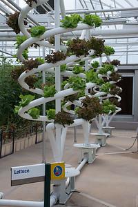 Lettuce Spiral