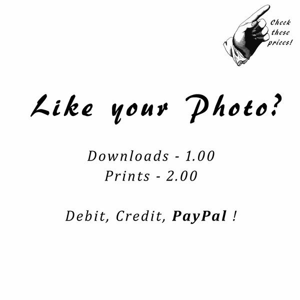 Like your photo-4