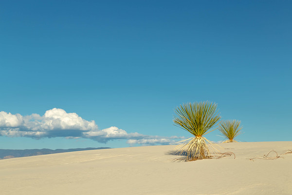 White Sands and Yuccas