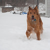 1/24-1/26/14<br /> <br /> visiting Sarah in Pensylvania. The kids are playing in the snow - and so is Flea.
