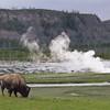 Bison Geyser