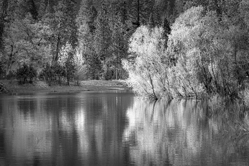 20130504_California_0624 Golden Willows with Reflections HDR Nik