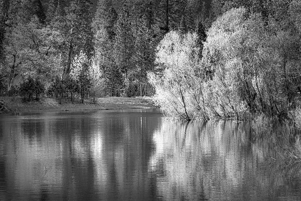 Merced River Willow Reflections