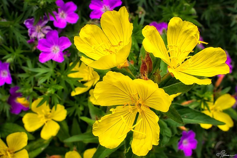 fleurs-jaune_14444766551_o