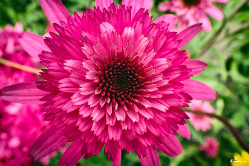 jardins-avec-danielle-et-franois-8_14805309043_o