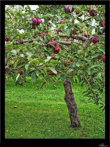 Aux pommes à Oka-14