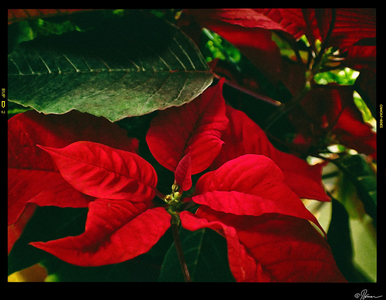 Bouquet de Noël-1
