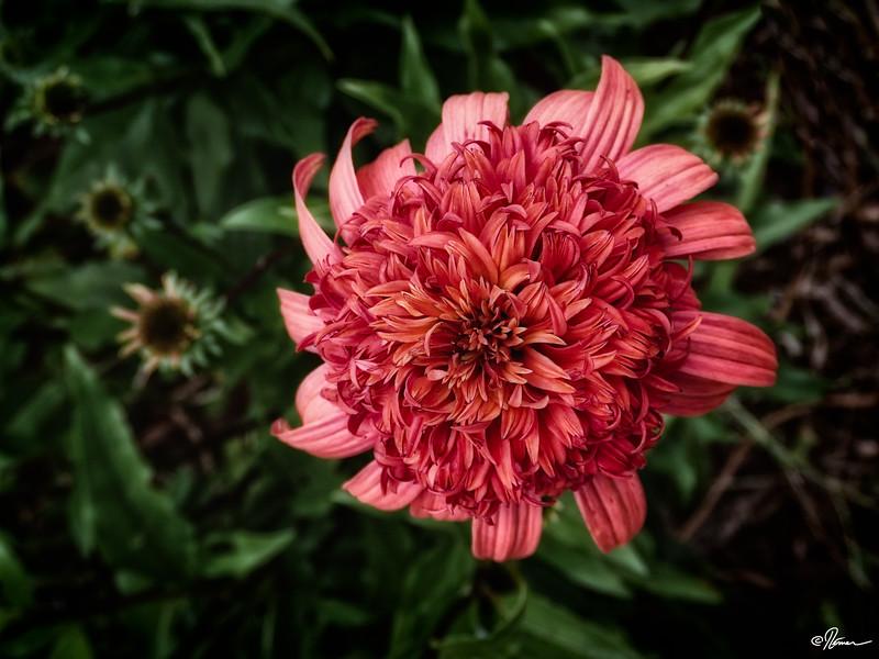 jardins-avec-danielle-et-franois-2_14782301161_o