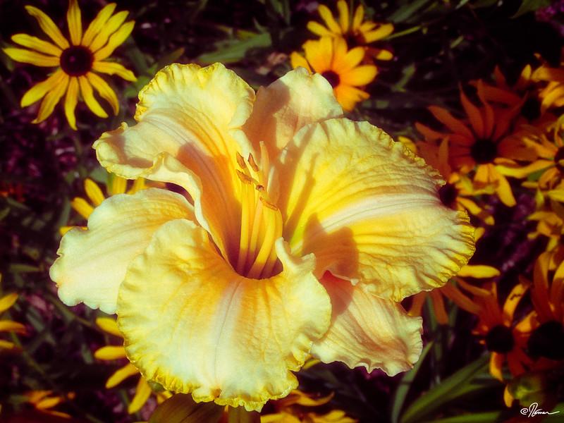 jardins-avec-danielle-et-franois-3_14785452465_o