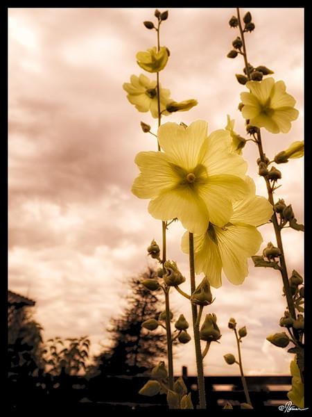 jardins-avec-danielle-et-franois-16_14598821050_o