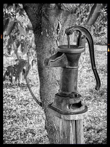 JardinsAvecDanielleEtFrancois-40