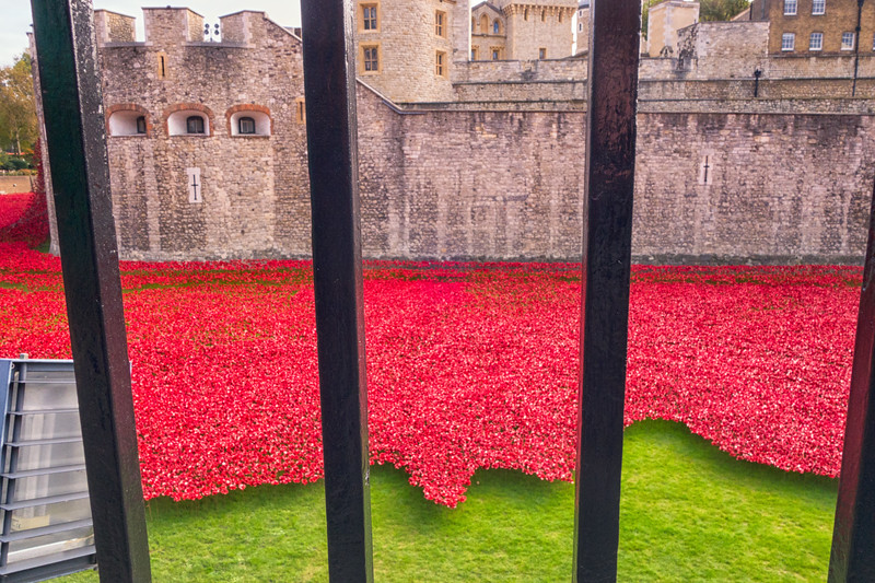 Tower of London with Poppies