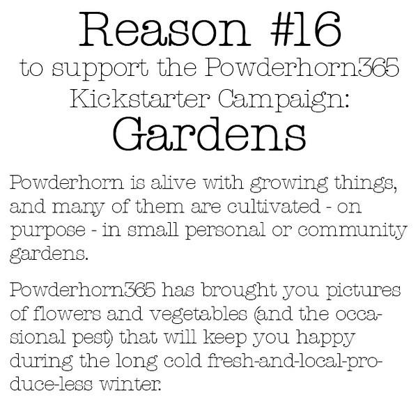 Reason #16
