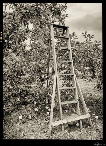 aux-pommes-a-oka-18_15149342029_o
