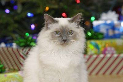 Levi - Christmas 2014