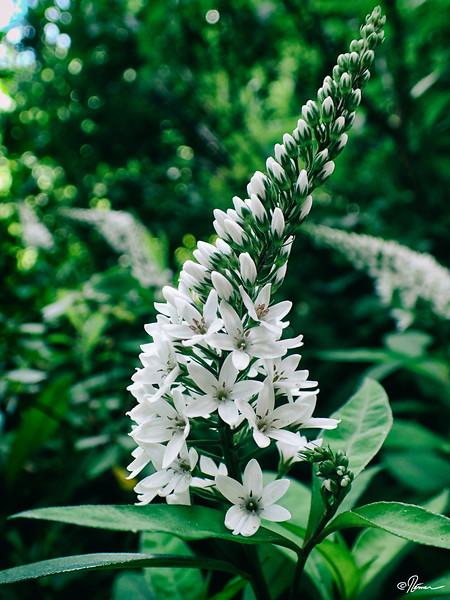 jardins-avec-danielle-et-franois-9_14782316181_o