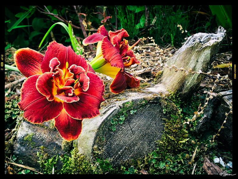 jardins-avec-danielle-et-franois-26_14598839780_o