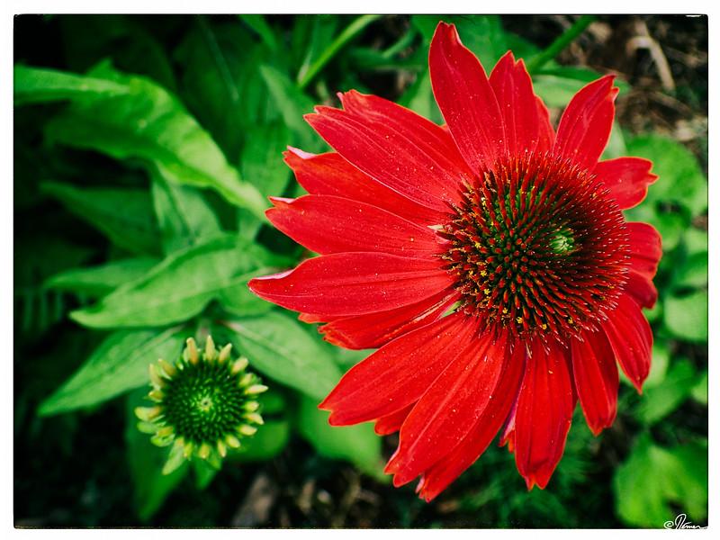 jardins-avec-danielle-et-franois-25_14782392671_o