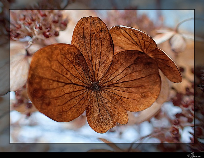 bosquet-dhiver-1_16022079621_o