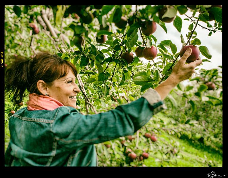 Aux pommes à Oka-22