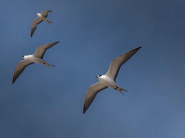 Taking Terns