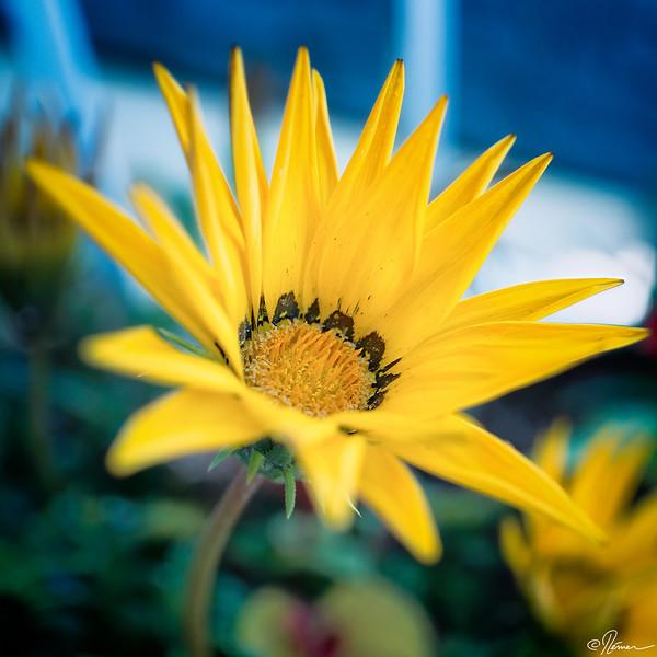 jaune--noire_14274978738_o