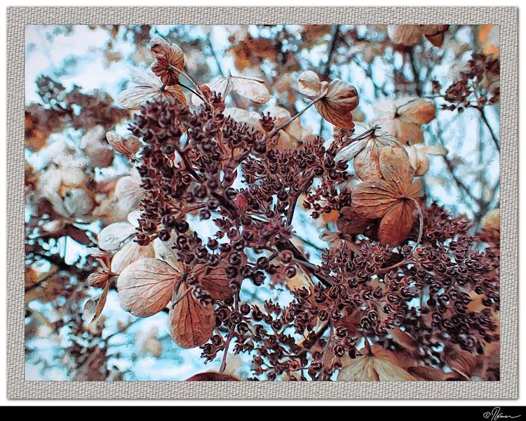 Bosquet d'hiver-1