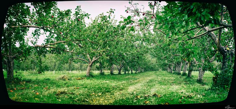 Aux pommes à Oka-20