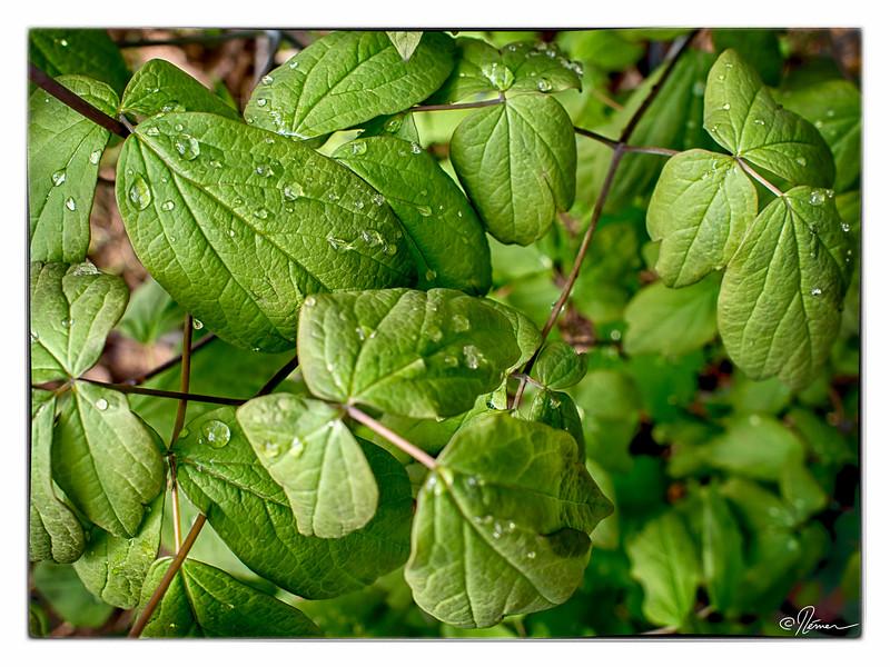 feuilles-vertes2_14267164302_o