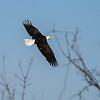 Eagles (LG)