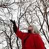 Rob Winner – rwinner@shawmedia.com<br /> <br /> Life-long Joliet resident Loretta DeMoss points to a tree where a bald eagle had recently perched looking over the Des Plaines River near Bluff and Lime Streets on Wednesday, Feb. 12, 2014.