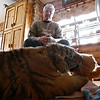 Rob Winner – rwinner@shawmedia.com<br /> <br /> Big Run Wolf Ranch owner John Basile watches as Shere Khan, a five-month-old Siberian tiger, plays with a stuffed teddy bear in his kitchen in Lockport, Ill., Wednesday, March 5, 2014.
