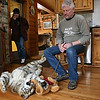 Rob Winner – rwinner@shawmedia.com<br /> <br /> Ranch manager Renee Cajandig (left) and owner of Big Run Wolf Ranch John Basile watch as Shere Khan, a five-month-old Siberian tiger, plays with a stuffed teddy bear in Basile's kitchen in Lockport, Ill., Wednesday, March 5, 2014.