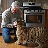Rob Winner – rwinner@shawmedia.com<br /> <br /> John Basile, the owner and operator of Big Run Wolf Ranch in Lockport, Ill., plays with Shere Khan, a five-month-old Siberian tiger, in Basile's kitchen on Wednesday, March 5, 2014.