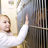 Rob Winner – rwinner@shawmedia.com<br /> <br /> Tessa Pierard, 5, looks over a chocolate labrador during a visit to Joliet Township Animal Control on Wednesday, March 12, 2014.
