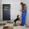 "Rob Winner – rwinner@shawmedia.com<br /> <br /> Certified veterinary technician Whitney Armstrong uses her cellular phone to photograph Shadow, a miniature pinscher mix, at Joliet Township Animal Control on Wednesday, March 12, 2014. The images of Shadow will then be uploaded to the JTAC Facebook page. JTAC credits the images on their Facebook for a recent increase in pet adoptions. ""It's worth spending an extra 20 minutes to get a good photo, because it helps them find a home quicker,"" said Armstrong while taking the photographs."