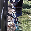 John Patsch - For Shaw Media<br /> Janetta Lewis cleans the trash and leaves out of the fence line During the volunteer clean-up day at Desplaines Gardens
