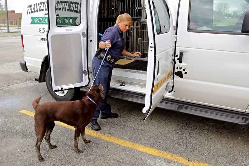 Rob Winner – rwinner@shawmedia.com<br /> <br /> Karen Zobjeck returns to Frankfort Township Animal Control with a dog she found near the intersection of Wolf and West Steger roads in Frankfort Friday morning.