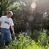 Rob Winner – rwinner@shawmedia.com<br /> <br /> Dr. Sheldon S. Nicol looks over some prairie dock while weeding the backyard of his Shorewood home Friday, June 6, 2014. For the past eight years Nicol has planted native plants around his property.