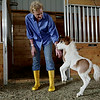 Rob Winner – rwinner@shawmedia.com<br /> <br /> Kim Peters of Calypso Farm in Lockport is greeted by Awesome Calypso Chrome, a two-week-old miniature horse, after letting him our of his pen Wednesday, June 11, 2014.