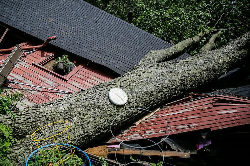 Wilmington Storm (LG)